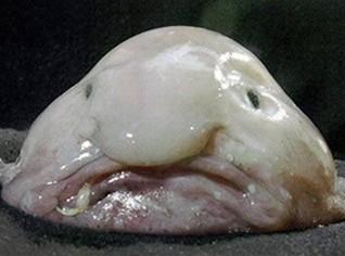 世界上最a世界的鱼-神奇动物-三支脚人网的搞笑图片戴绿帽图片